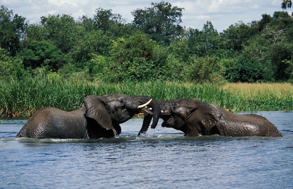 2 Days Murchison Falls National Park Tour and Safari Ziwa Rhino Tracking
